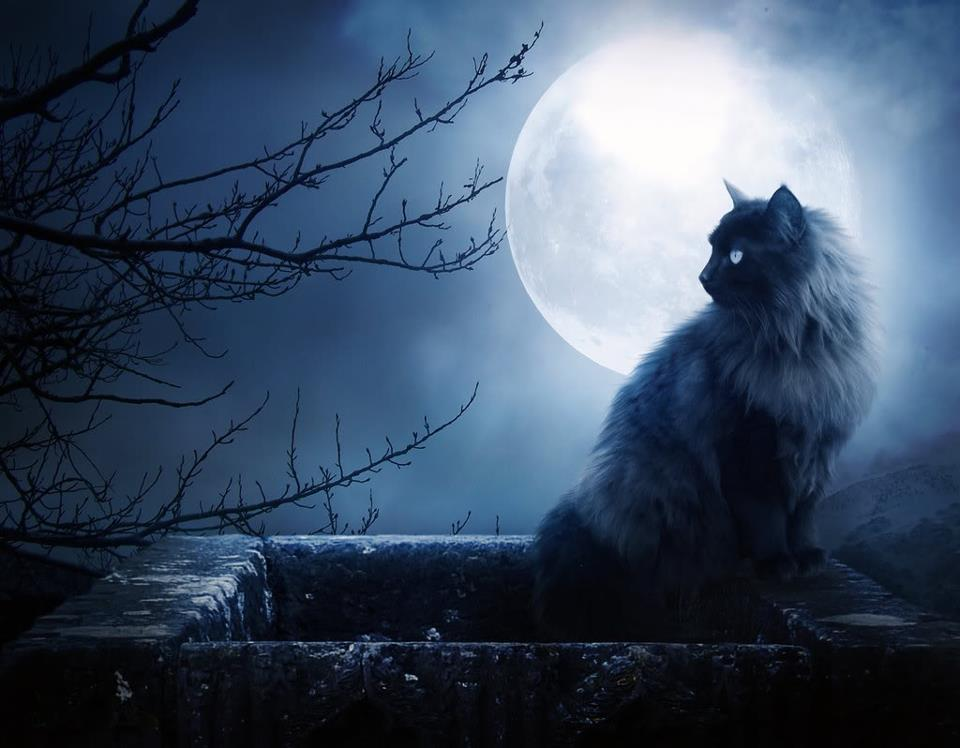 Cat Moon Photo
